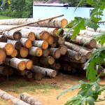 Madera: biomasa forestal
